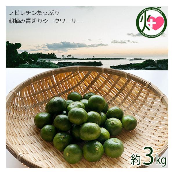 朝摘み青切りシークヮーサー 3kg(約120個〜170個) 沖縄 人気 シークワーサー 果実 たけしの家庭の医学 尿もれ 頻尿 ノビレチン 南国フルーツ 送料無料
