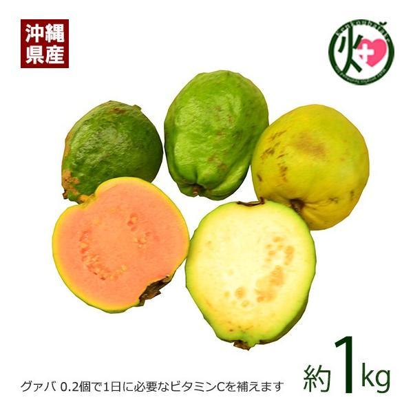 期間限定 7〜9月 沖縄産 グァバ 約1kg 赤・白どちらになるかはお任せになります 沖縄 人気 南国フルーツ 希少 土産  条件付き送料無料