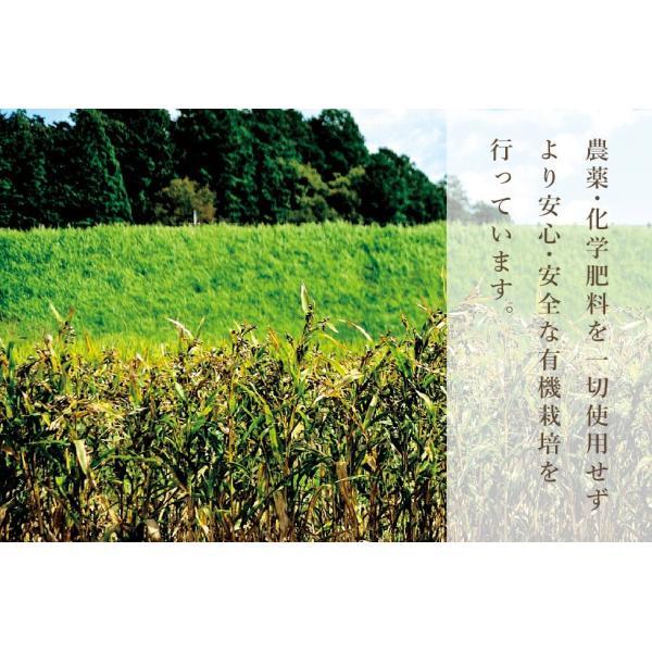 ハトムギ ハトムギ茶 活性はとむぎ美人茶 農薬不使用ティーバックタイプ はと麦 はと麦茶 鳩麦 奈良県産 自社栽培|kenko-soleil-y|05