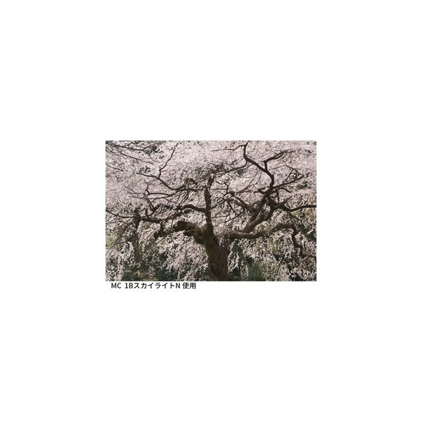 即配 KT 67mm MC 1B スカイライト N ケンコートキナー KENKO TOKINA  ネコポス便 ピンクのバランス色で肌や桜を綺麗に表現