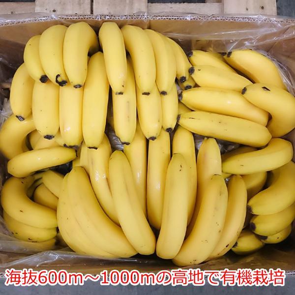 オーガニックバナナ/1箱 11kg(目安60本以上)【メーカー直送】