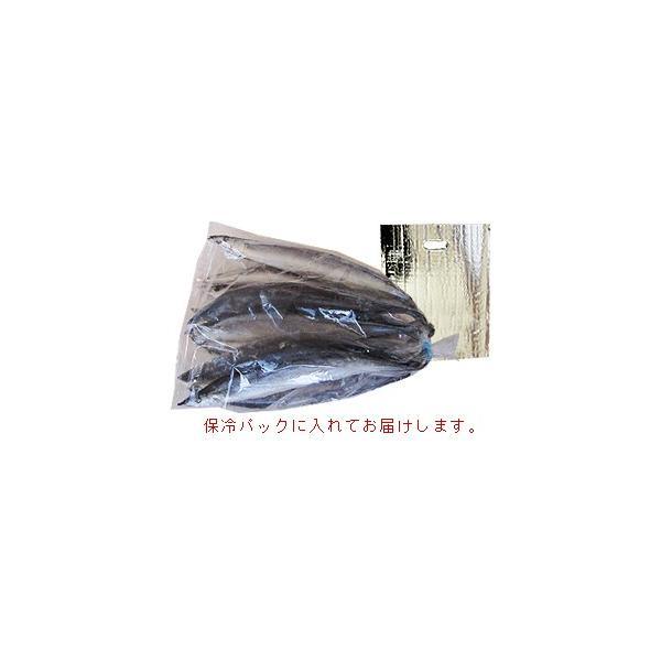 訳あり さんま 冷凍 【足利本店】 (10本(合計1.3キロ以上)) 気仙沼 三陸 秋刀魚 お取り寄せ|kesennuma-san|05
