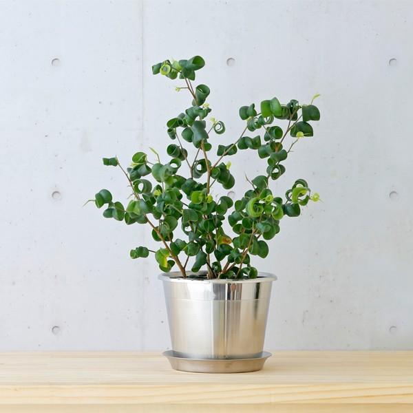 RoomClip商品情報 - KEYUCA(ケユカ) フラワーポット 植木鉢 | plecta フラワーポットセット 植木鉢 Φ120