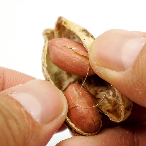 国産ピーナッツ 200g ナッツ 薄皮付きピーナッツ 国産 皮付きピーナッツ 送料無料