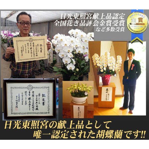 胡蝶蘭 大輪3本立ち 20,000円 明日贈れる 選べる3色 白 ピンク 赤リップ  贈答用 お祝い ギフト お供え|kihana-shop|05