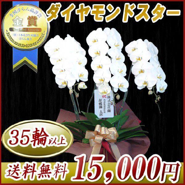 胡蝶蘭 大輪 白 3本立ち 送料無料 明日贈れる 15,000円 お祝い ギフト お供え 開店祝い 即日配送|kihana-shop