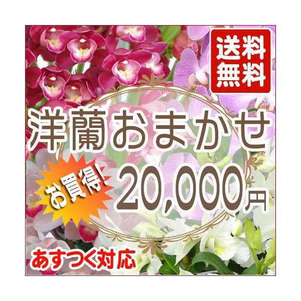 洋蘭おまかせ20,000円|kihana-shop