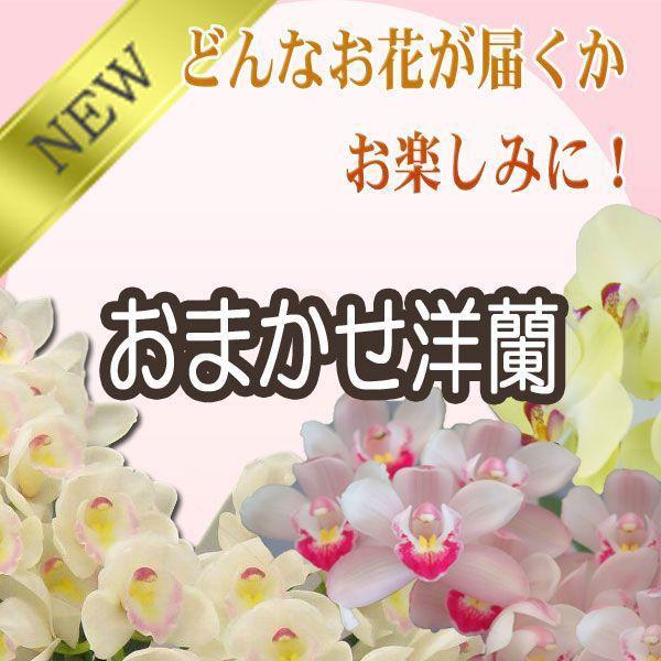 洋蘭おまかせ20,000円|kihana-shop|03