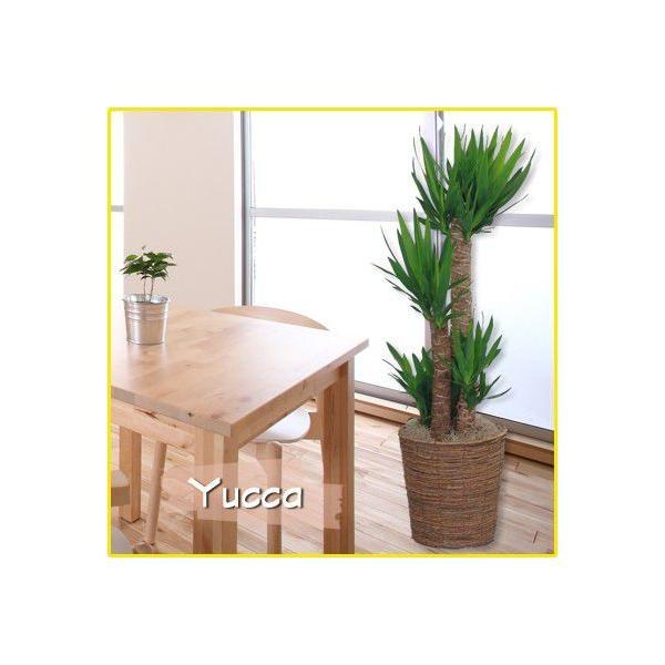 観葉植物 マッサン・ユッカ 8号鉢 バスケット付き 送料無料 即日発送の輝華 開店祝い 新築祝い|kihana-shop|03