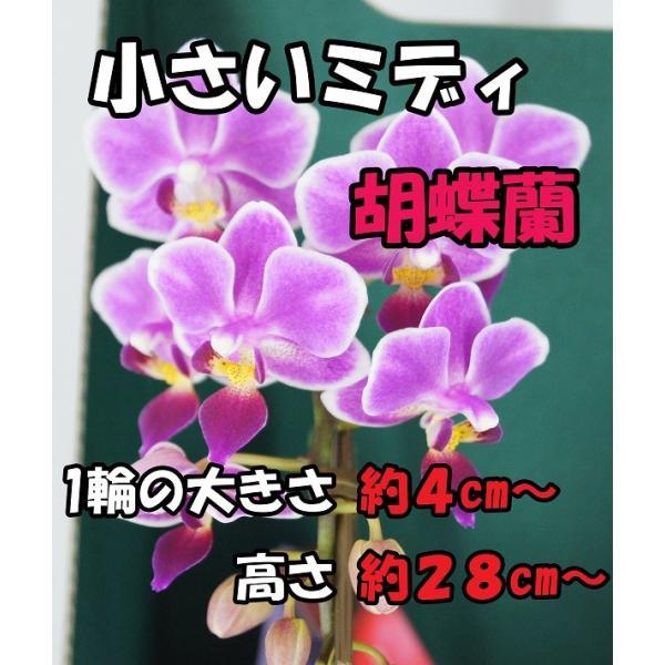 マイクロ胡蝶蘭1本立「キャンドルグラス」|kihana-shop|03