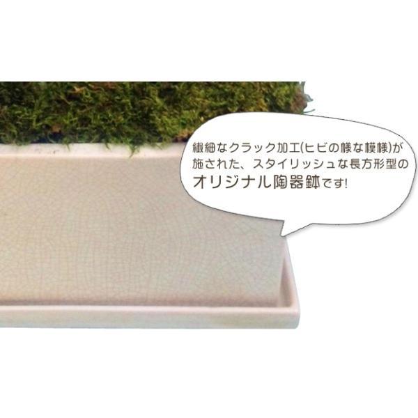 観葉寄せミディ黄色2本立オリジナル陶器鉢(パルテノ鉢)|kihana-shop|03