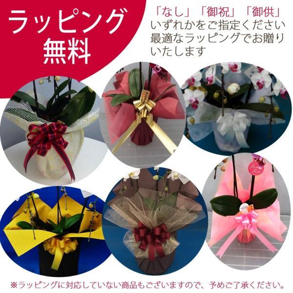 観葉寄せミディ黄色2本立オリジナル陶器鉢(パルテノ鉢)|kihana-shop|06