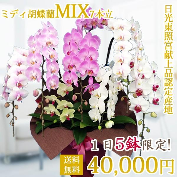 母の日ギフト ミディ胡蝶蘭MIX7本立|kihana-shop