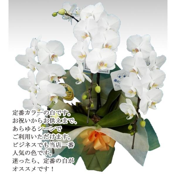 胡蝶蘭ランキング1位 3本立ち 明日贈れる 贈答用 お祝い ギフト お供え|kihana-shop|14