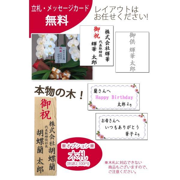 胡蝶蘭ランキング1位 3本立ち 明日贈れる 贈答用 お祝い ギフト お供え|kihana-shop|10