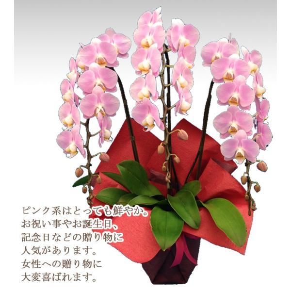 胡蝶蘭ランキング1位 3本立ち 明日贈れる 贈答用 お祝い ギフト お供え|kihana-shop|16