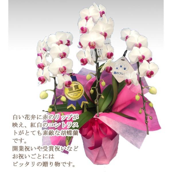 胡蝶蘭ランキング1位 3本立ち 明日贈れる 贈答用 お祝い ギフト お供え|kihana-shop|15