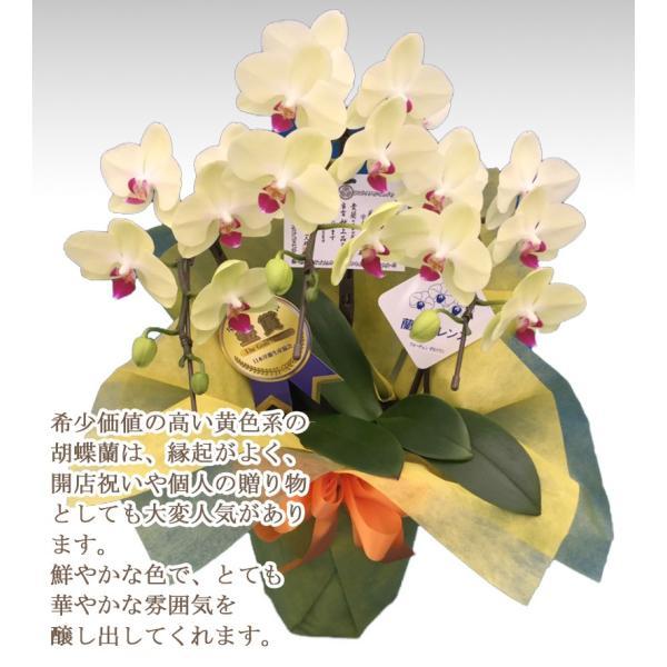 胡蝶蘭ランキング1位 3本立ち 明日贈れる 贈答用 お祝い ギフト お供え|kihana-shop|02