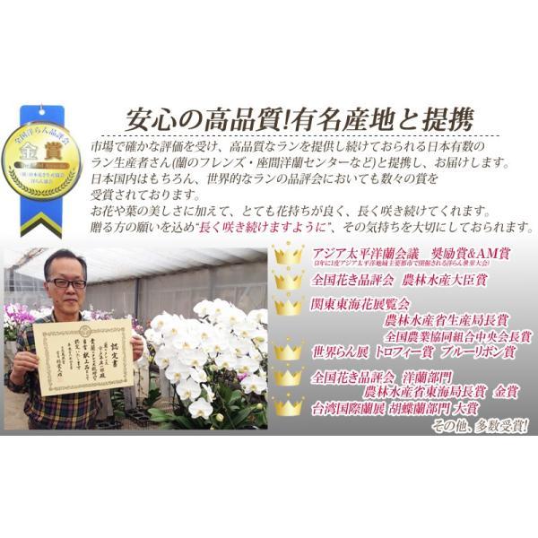 胡蝶蘭ランキング1位 3本立ち 明日贈れる 贈答用 お祝い ギフト お供え|kihana-shop|07