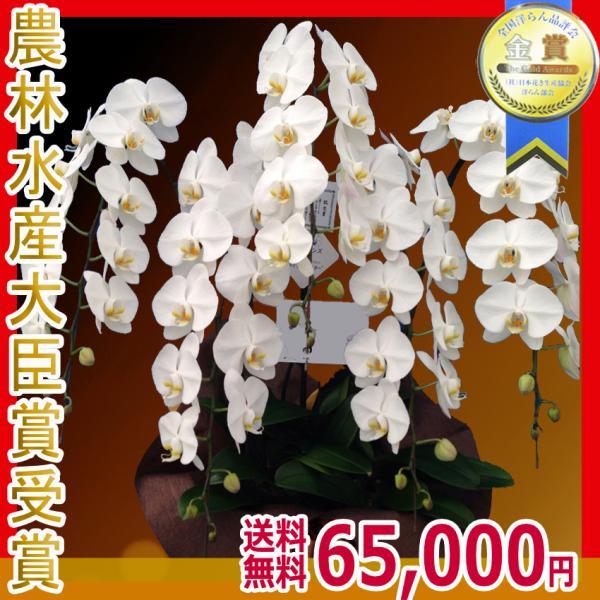 胡蝶蘭(コチョウラン) 大輪 白 5本立 60輪前後〜 16