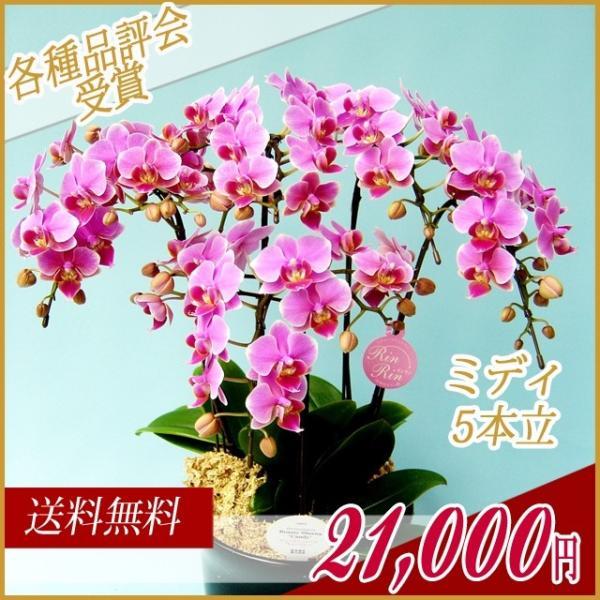 胡蝶蘭(コチョウラン) ミディ ピンク 5本立 28|kihana-shop