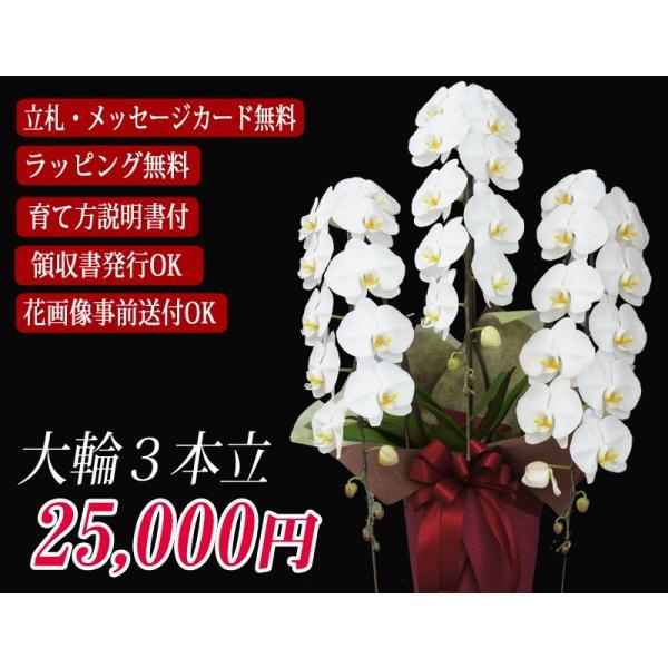 胡蝶蘭 大輪 3本立ち  25,000円 明日贈れる  選べる3色 白 ピンク 赤リップ  贈答用 お祝い ギフト お供え kihana-shop 02