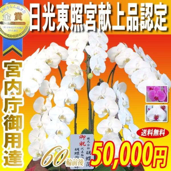 胡蝶蘭 大輪 5本立ち 50,000円 選べる3色 明日贈れる 贈答用 お祝い ギフト お供え kihana-shop