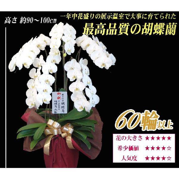 胡蝶蘭 大輪 5本立ち 選べる3色 明日贈れる  贈答用 お祝い ギフト お供え|kihana-shop|02