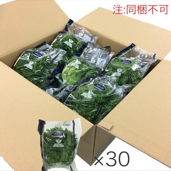 【お得/同梱不可】フリルレタス(株、30個セット)、フリルアイス|kimidoristore2