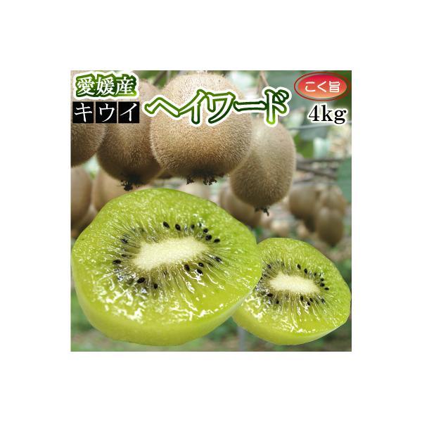 12月上旬より発送 愛媛県産キウイフルーツ4kg