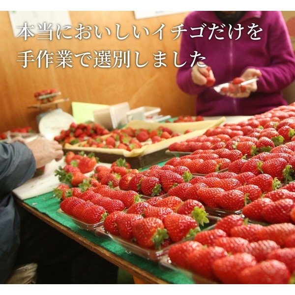 いちご まりひめ ギフト 贈答用 [送料無料] 和歌山県産 紀のベリー(ゴールド)|kino-farm|03