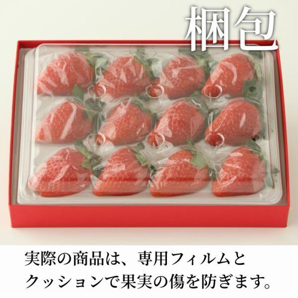 いちご まりひめ ギフト 贈答用 [送料無料] 和歌山県産 紀のベリー(ゴールド)|kino-farm|06