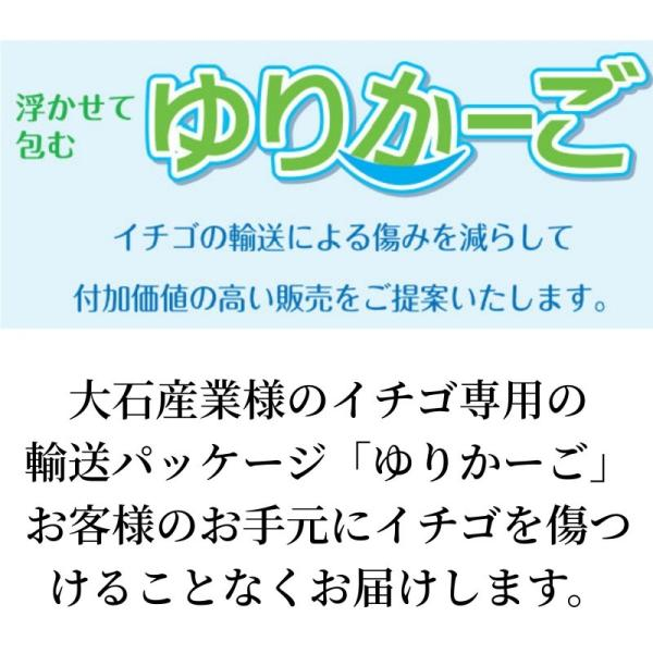 いちご まりひめ ギフト 贈答用 [送料無料] 和歌山県産 紀のベリー(ゴールド)|kino-farm|07
