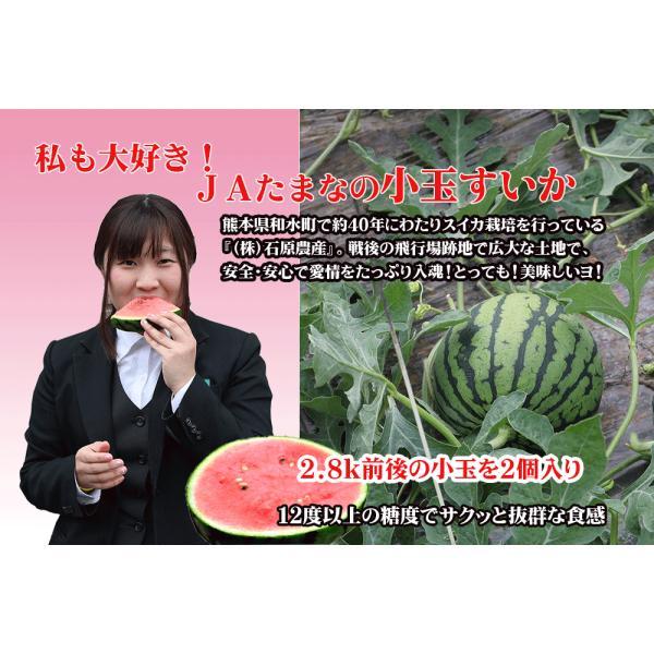 九州・熊本県JA玉名の小玉スイカ(2玉)|kiramekitamana