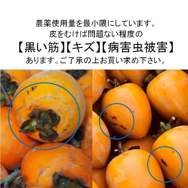 柿 干し柿用つるし柿 愛宕柿 枝つき 約4kg入り 農家直送 愛媛県産 11月中旬発送開始予定|kirari-fruits-farm|05