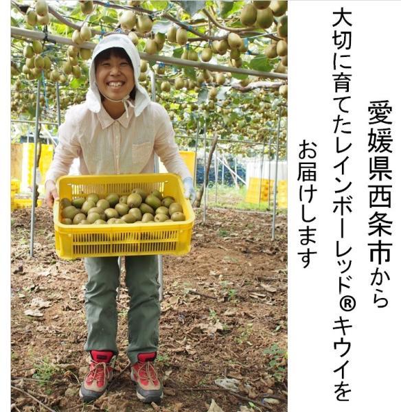 キウイフルーツ レインボーレッドキウイ 赤いキウイ デイリーレインボー レギュラーサイズ 約2k入り 農家直送 愛媛県産 11月中旬発送開始  kirari-fruits-farm 12