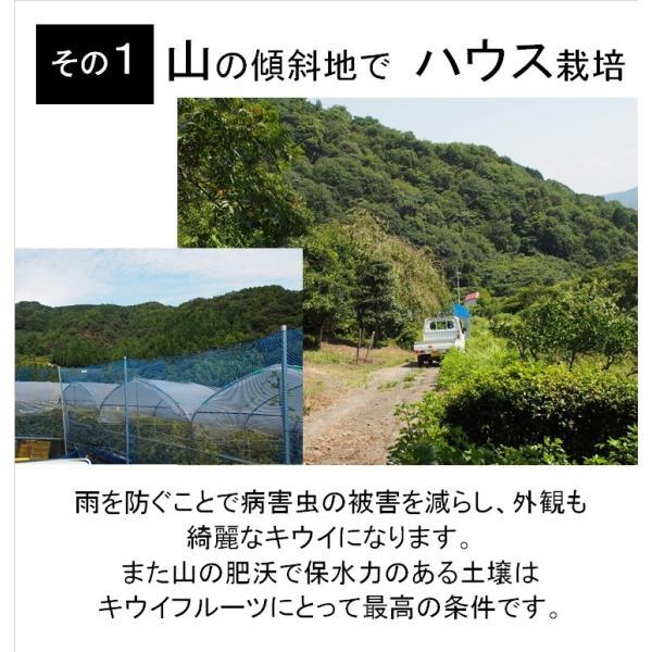 キウイフルーツ レインボーレッドキウイ 赤いキウイ デイリーレインボー レギュラーサイズ 約2k入り 農家直送 愛媛県産 11月中旬発送開始  kirari-fruits-farm 05