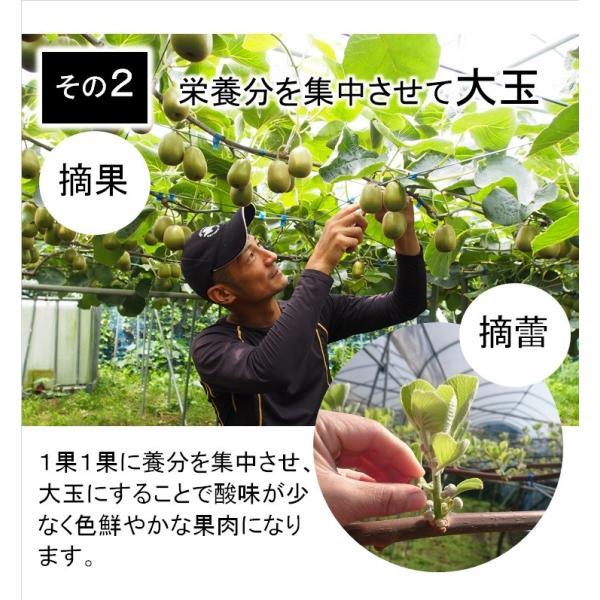 キウイフルーツ レインボーレッドキウイ 赤いキウイ デイリーレインボー レギュラーサイズ 約2k入り 農家直送 愛媛県産 11月中旬発送開始  kirari-fruits-farm 06