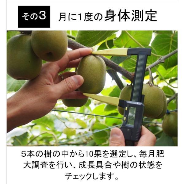 キウイフルーツ レインボーレッドキウイ 赤いキウイ デイリーレインボー レギュラーサイズ 約2k入り 農家直送 愛媛県産 11月中旬発送開始  kirari-fruits-farm 07