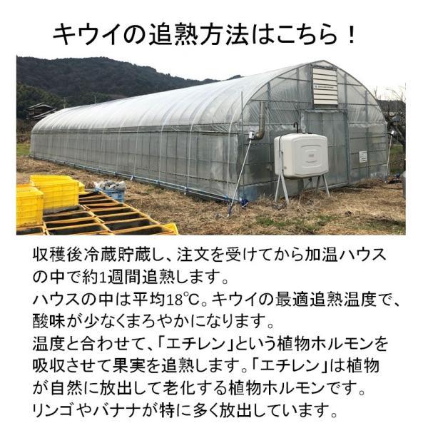 キウイフルーツ グリーンキウイ ヘイワード 約2.5kg入り 23〜28個入り 農家直送 愛媛県産|kirari-fruits-farm|12
