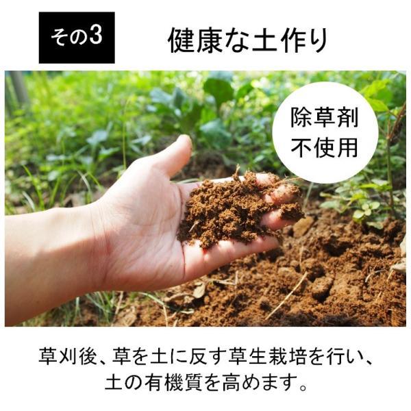 キウイフルーツ グリーンキウイ ヘイワード 約2.5kg入り 23〜28個入り 農家直送 愛媛県産|kirari-fruits-farm|09