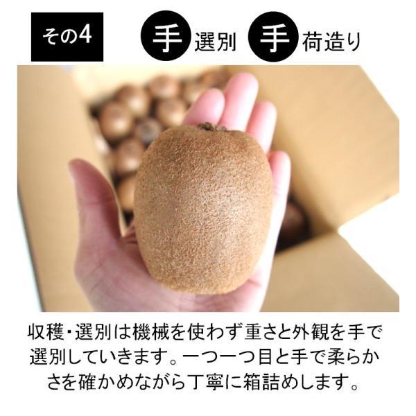 キウイフルーツ グリーンキウイ ヘイワード 約2.5kg入り 23〜28個入り 農家直送 愛媛県産|kirari-fruits-farm|10