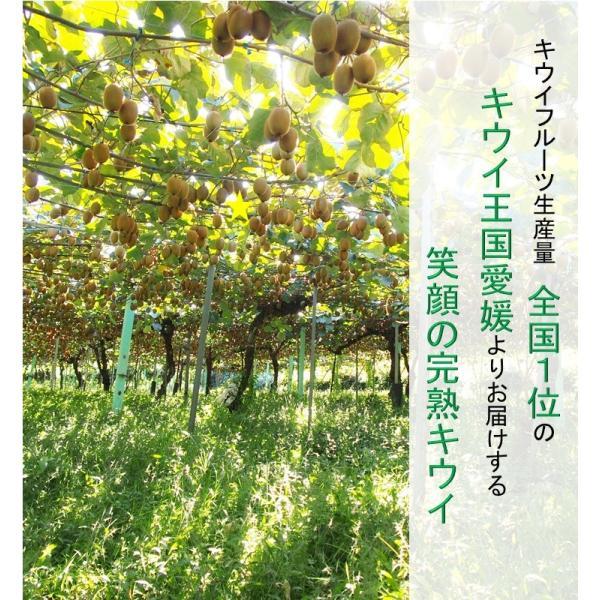 キウイフルーツ プレミアムグリーン ヘイワード 大玉9個入り ギフトBOX 農家直送 愛媛県産|kirari-fruits-farm|02