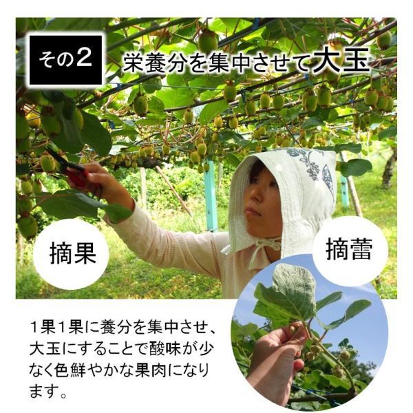 キウイフルーツ プレミアムグリーン ヘイワード 大玉9個入り ギフトBOX 農家直送 愛媛県産|kirari-fruits-farm|07