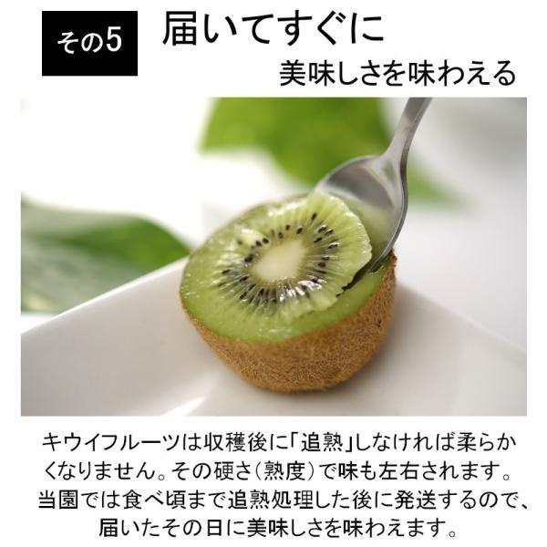 キウイフルーツ プレミアムグリーン ヘイワード 大玉9個入り ギフトBOX 農家直送 愛媛県産|kirari-fruits-farm|10