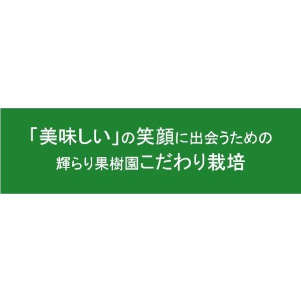 キウイフルーツ プレミアムグリーン ヘイワード 大玉18個入り ギフトBOX 農家直送 愛媛県産 kirari-fruits-farm 06