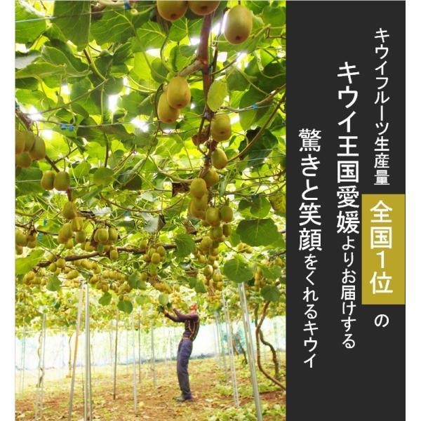 キウイフルーツ レインボーレッドキウイ 赤いキウイ プレミアムレインボー ギフト お歳暮 10個入り 農家直送 愛媛県産 11月中旬発送開始 |kirari-fruits-farm|03