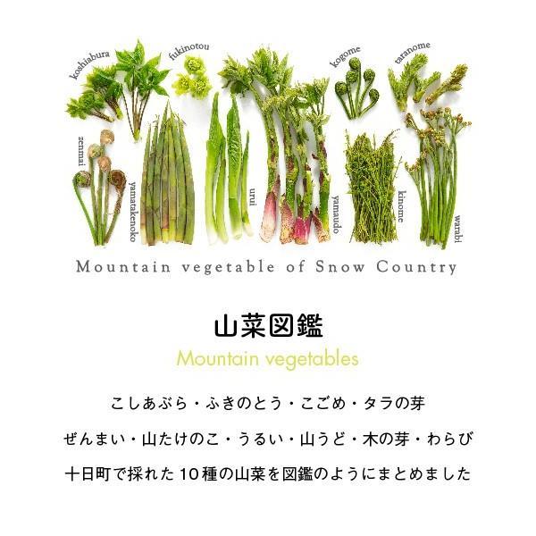 山菜図鑑Tシャツ 白 kiru-sansai 02