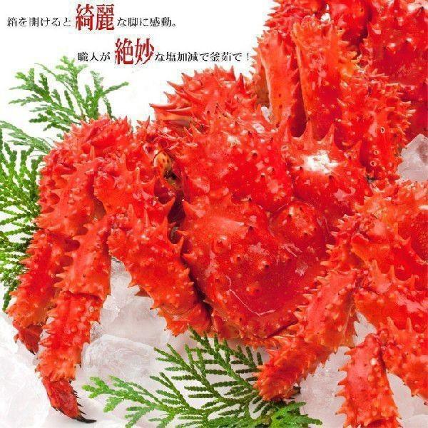 (送料無料)北海道産 花咲蟹 根室 (カニ かに 蟹 鍋セット)特大2尾オス|kitabisyoku|05