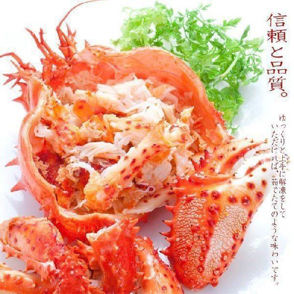 (送料無料)北海道産 花咲蟹 根室 (カニ かに 蟹 鍋セット)特大2尾オス|kitabisyoku|06